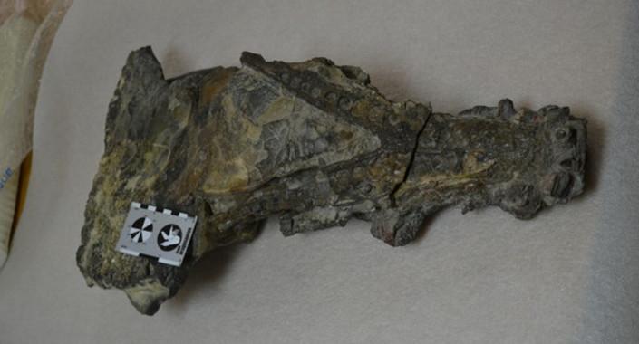 <p>Cocodrilo de Ordesa, ejemplar único en España de un cráneo de cocodrilo marino de hace 50 millones de años hallado en Huesca que permanece sin estudiar, tal y como se encontró en la roca. /José Ignacio Canudo</p>   <!-- A generated by theme -->   <script async src=