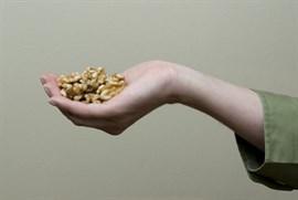 Las nueces activan un área del cerebro implicada en la regulación del hambre y los antojos