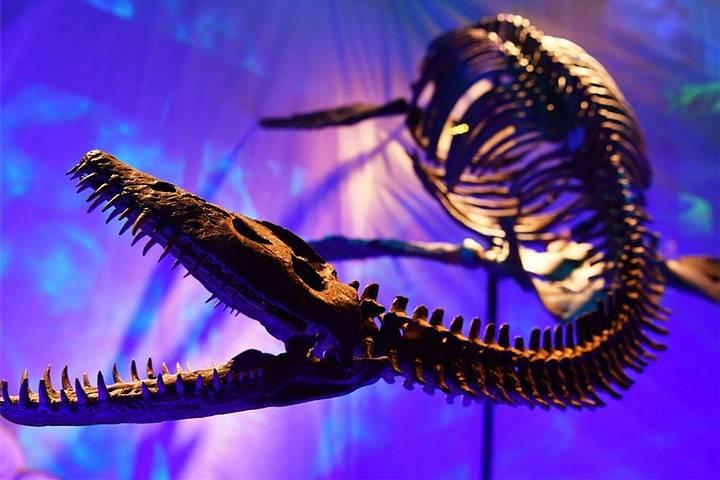 plesiosaurio-skeleton