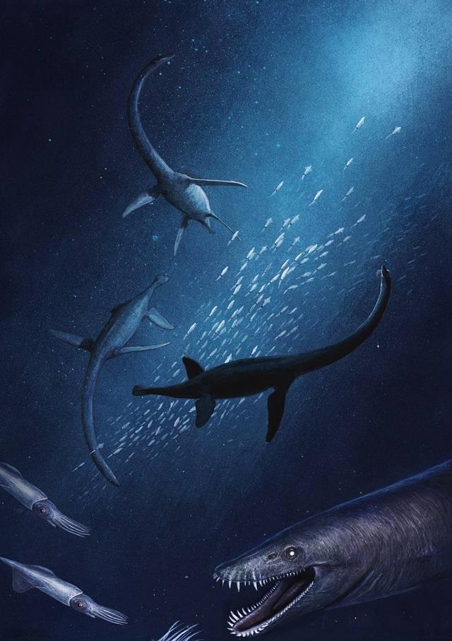 La nueva especie identificada vivía en un mar poco profundo que cubría el norte de Alemania hace cerca de 132 millones de años, lo que indica que el 'Lagenanectes richterae' existió unos 70 millones de años antes que los últimos elasmosauros.