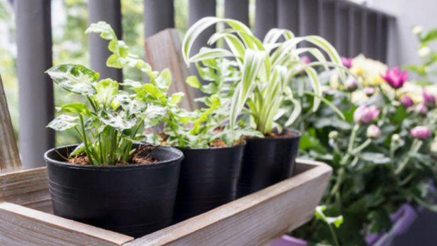 Como Hacer Una Jardinera De Madera Noticiero Universal - Como-hacer-una-jardinera