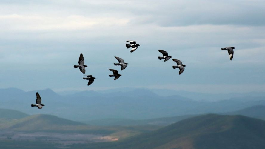 Matar Dos Pájaros De Un Tiro Y Otras Frases Que Peta Ya No