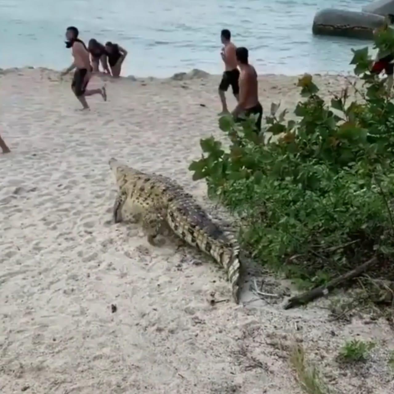 Image result for cocodrilo tayrona parque